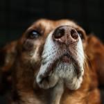 dog-813103_1920