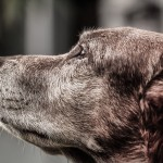 dog-916099_1920