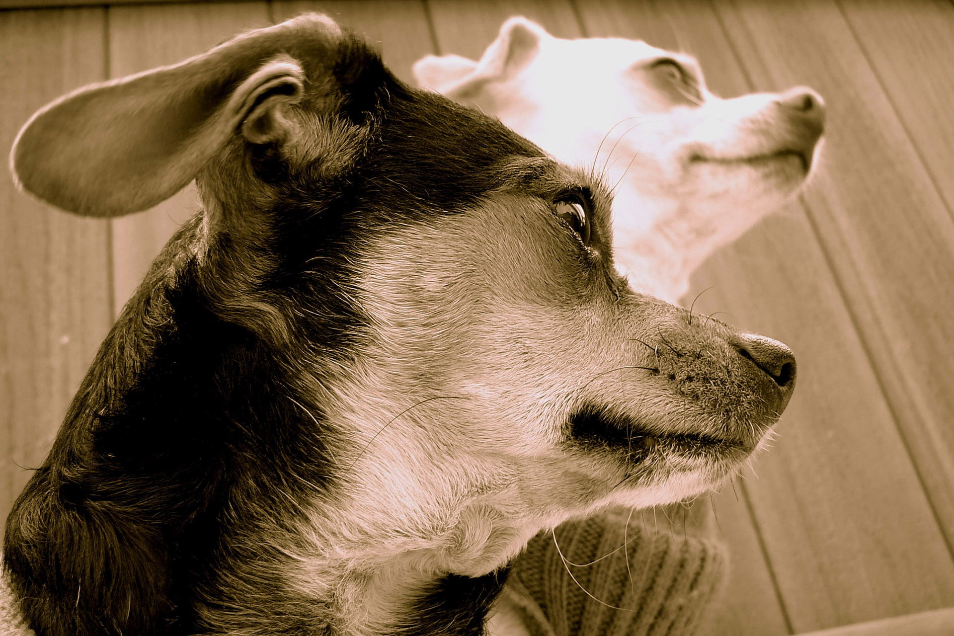 dogs-817750_1920