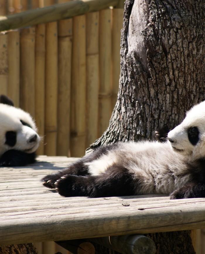 Zoo de Madrid cerca de en los apartamentos madrid por días